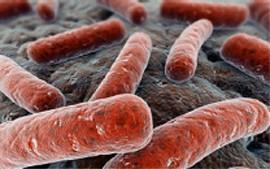Revista Nature Microbiology